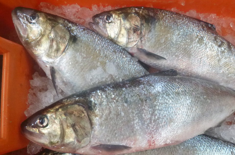 Which are the ecosystem services provided by diadromous fish?